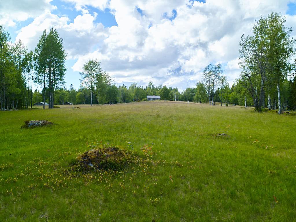 Välkommen till Rigåsen och dess ängsmarkerna långt uppe i Medelpads skogar.
